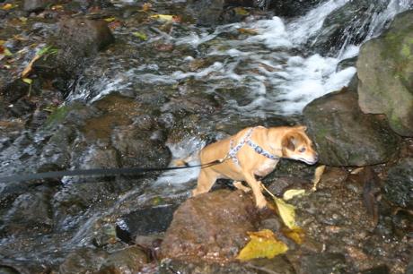滝の犬01