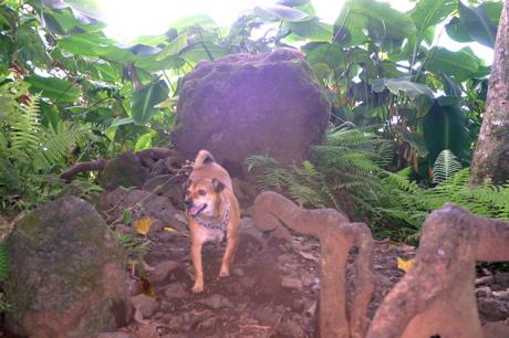 滝の犬02