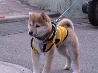 マック子犬01