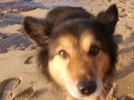 ハワイ犬のお散歩01