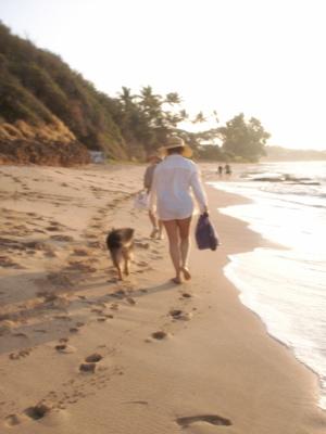 ハワイ犬のお散歩04