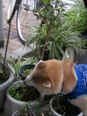 葉っぱ喰う01