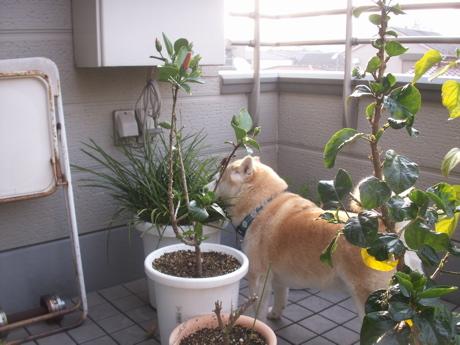 草喰う犬0