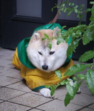 梅雨のお散歩01