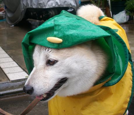 梅雨のお散歩02