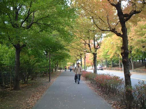 阪急北千里駅から大阪大学へつづく並木道