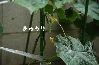 200606014-048.jpg