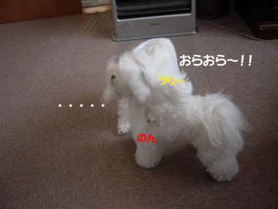 20070317-009.jpg