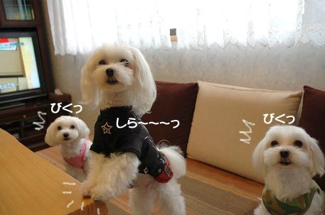 20070924-00903.jpg