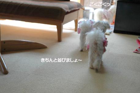 20080412-053.jpg