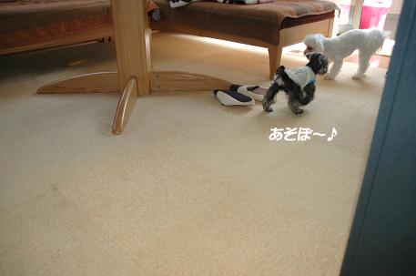 20080601-027.jpg