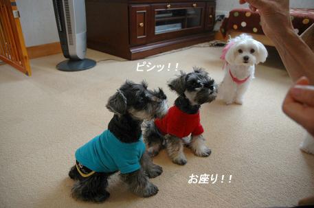 20080617-022.jpg
