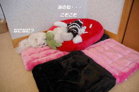 20081011-002_20081019203050.jpg