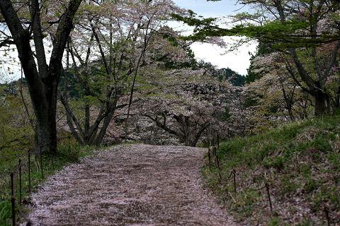 桜(高尾)08.4.19