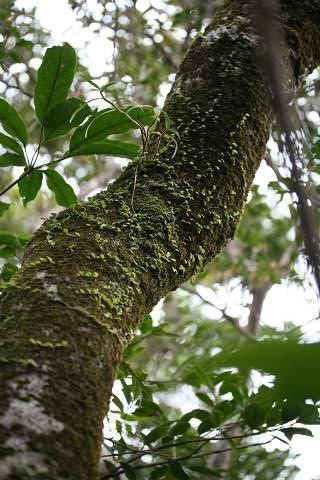森の風景07.2.4-2