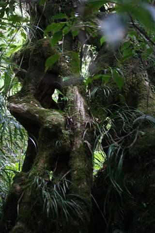 森の風景07.2.4