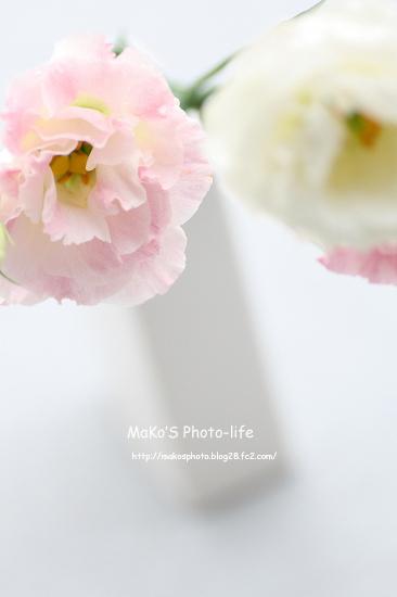 mIMG_8940のコピー