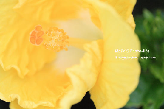 mIMG_8978のコピー