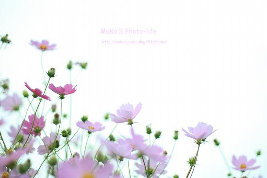 mIMG_9566のコピー