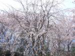 これぞ日本の春