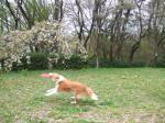 題名『犬が写り込んでいる花の風景』