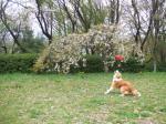 題名『犬が花の邪魔をする風景』