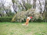 題名『変な犬がせっかくの花を台無しにする風景』