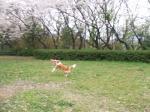 題名『犬と花の風景』