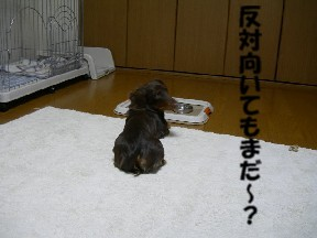 20060118105730.jpg