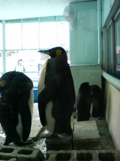 P1000ペンギン