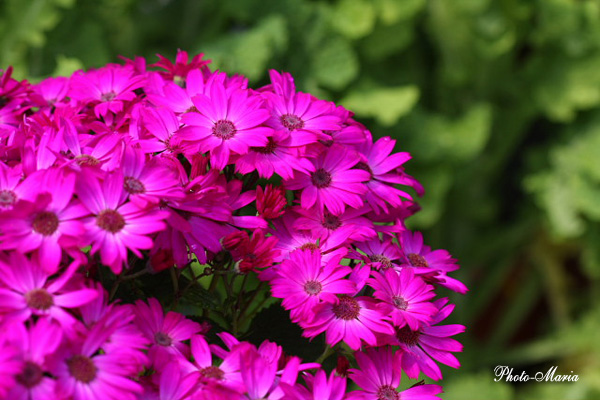 0803flower011.jpg