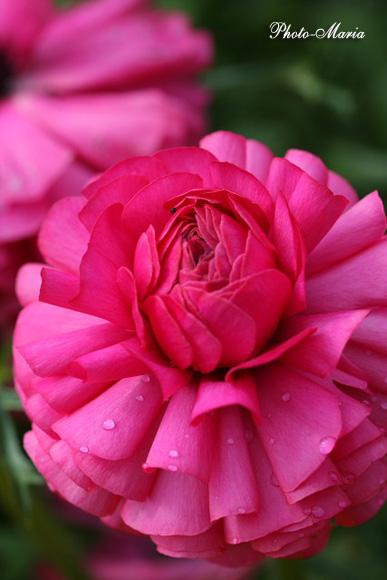 0803flower013.jpg