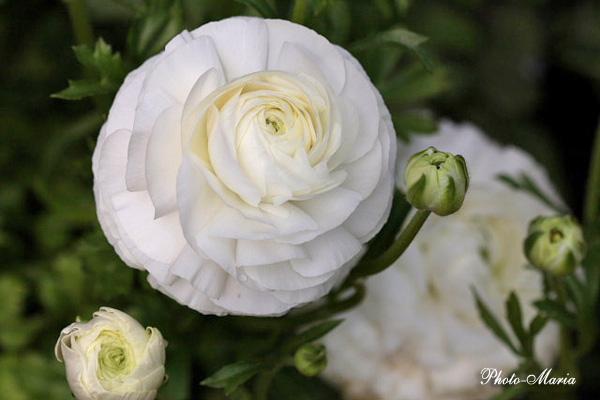 0803flower018.jpg