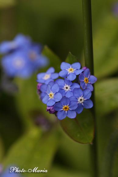 0803flower022.jpg