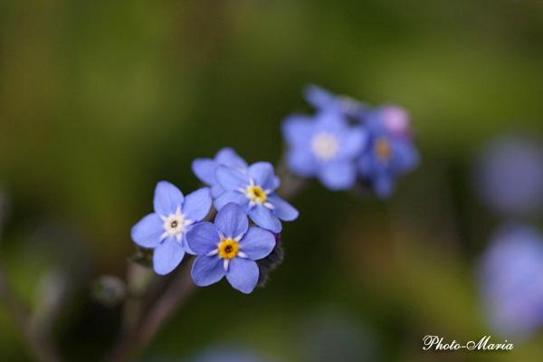 0803flower024.jpg