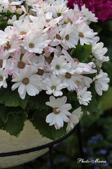 0803flower052.jpg