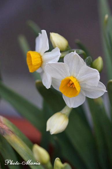 0803flower061.jpg