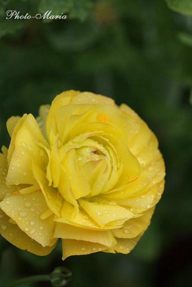 0803flower088.jpg