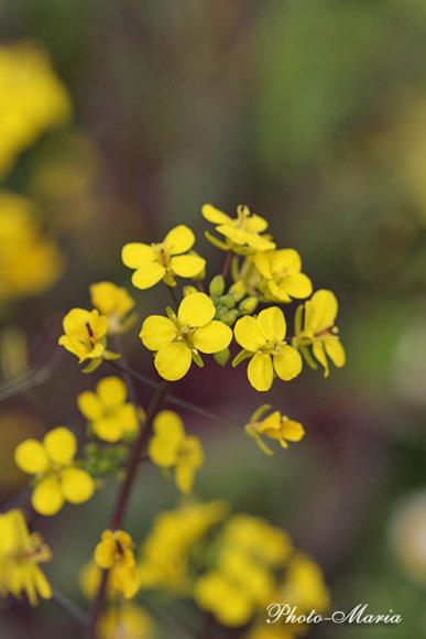 0803flower096.jpg