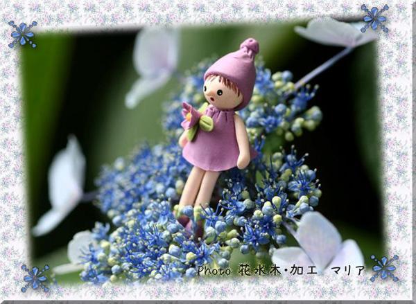 0807ajisaiyousei1.jpg