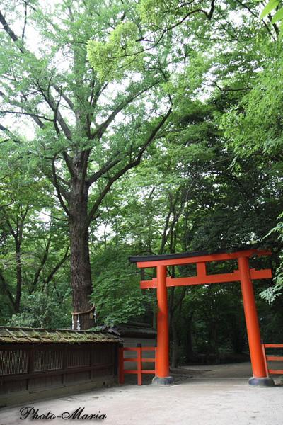2-0806kawai04.jpg
