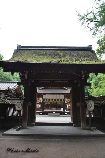 3-0806kawai05.jpg