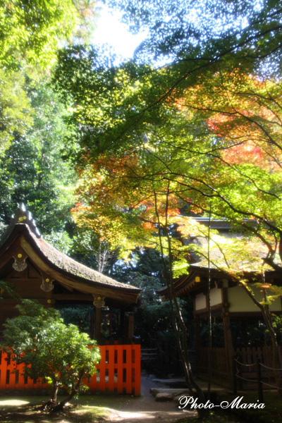 a2-0811k-kamigamo22.jpg