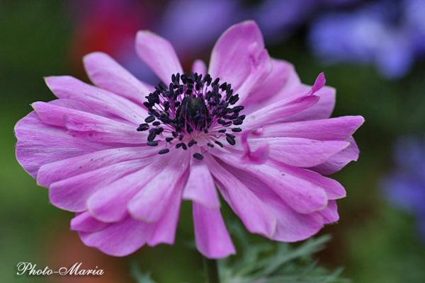 b0803flower043.jpg