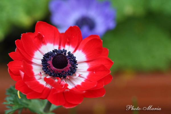 d0803flower037.jpg