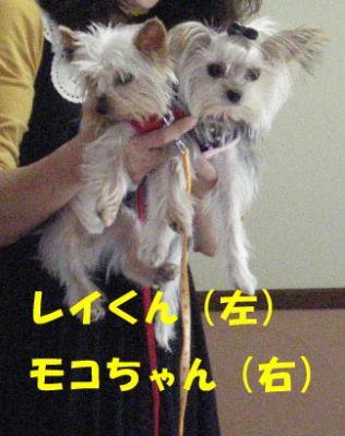 レイくん&モコちゃん