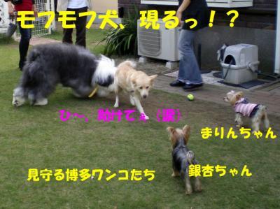 モフモフ犬現るっ!?