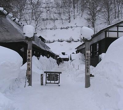 akita2008_05.jpg