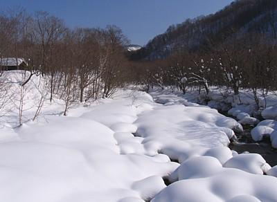 akita2008_07.jpg