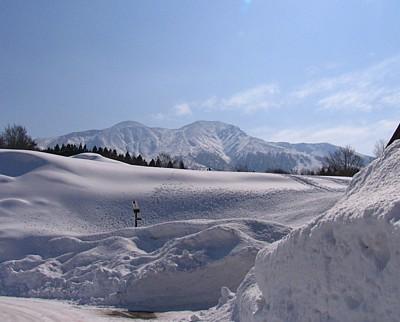 akita2008_08.jpg